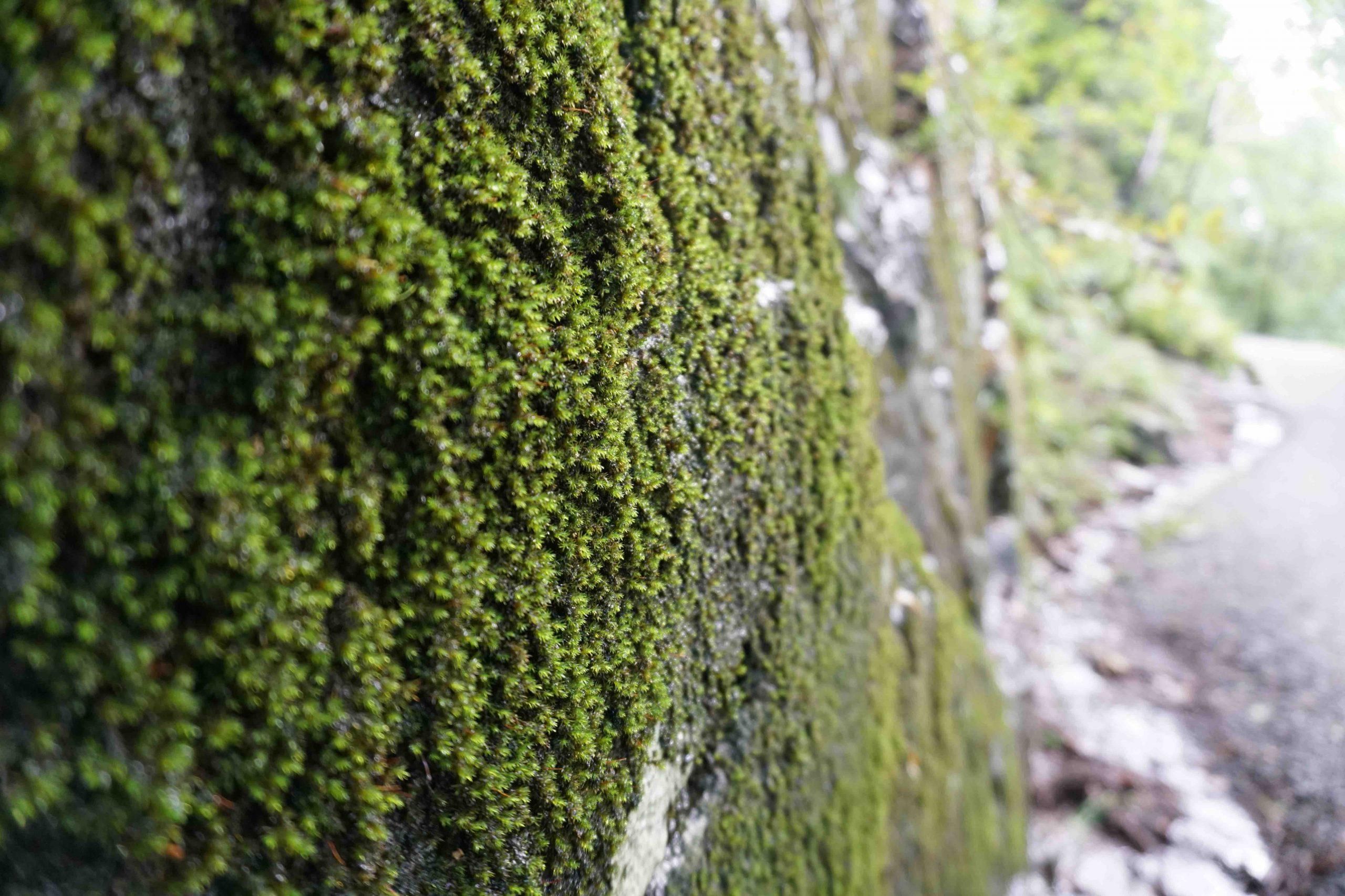 Fløyen Floyen Mountain Bergen Norway Moss